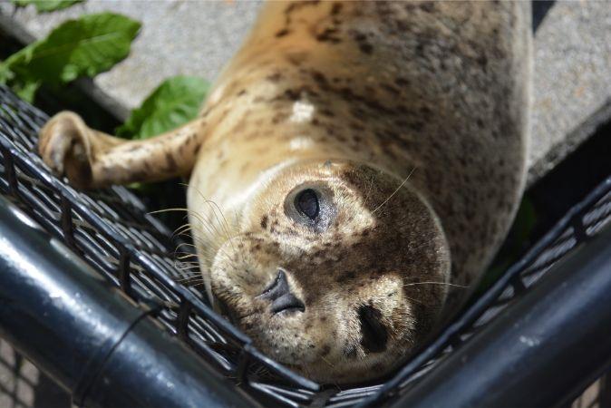 北海道旅行なら旭山動物園は必須!行動展示は大人もハマる楽しさ!